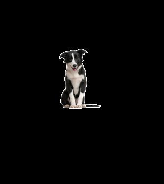110a3d4871 Póló készítés, egyedi póló készítés Állatok és Természet - Kutyák